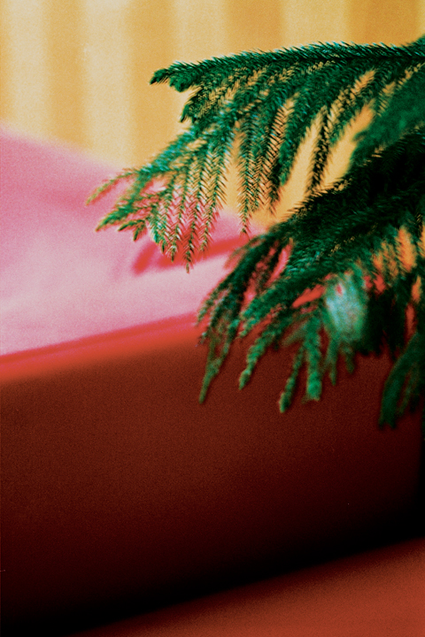 http://brianjamesphotography.net/files/gimgs/24_red-couch-green-leaves.jpg
