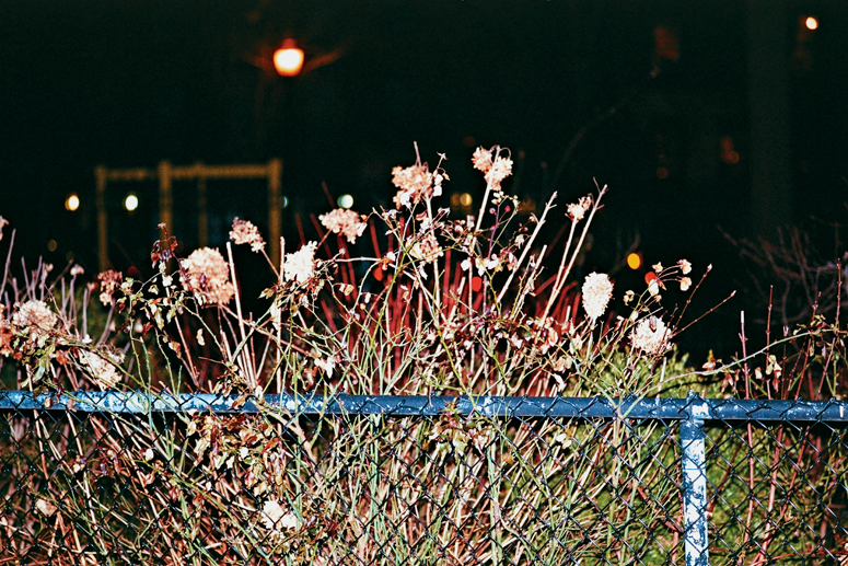 http://brianjamesphotography.net/files/gimgs/24_tompkins-fence-flowers.jpg